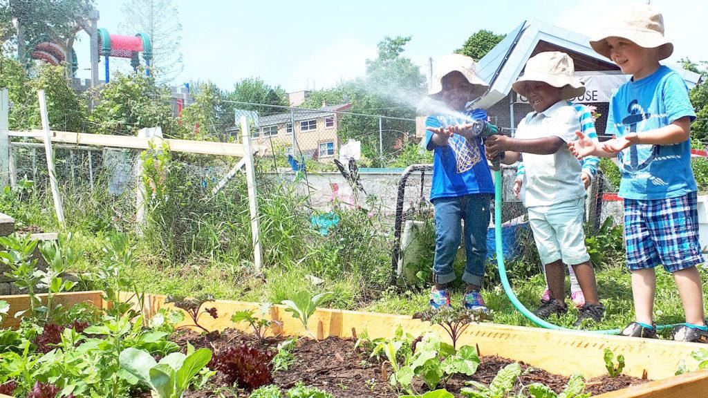 organic food gardens