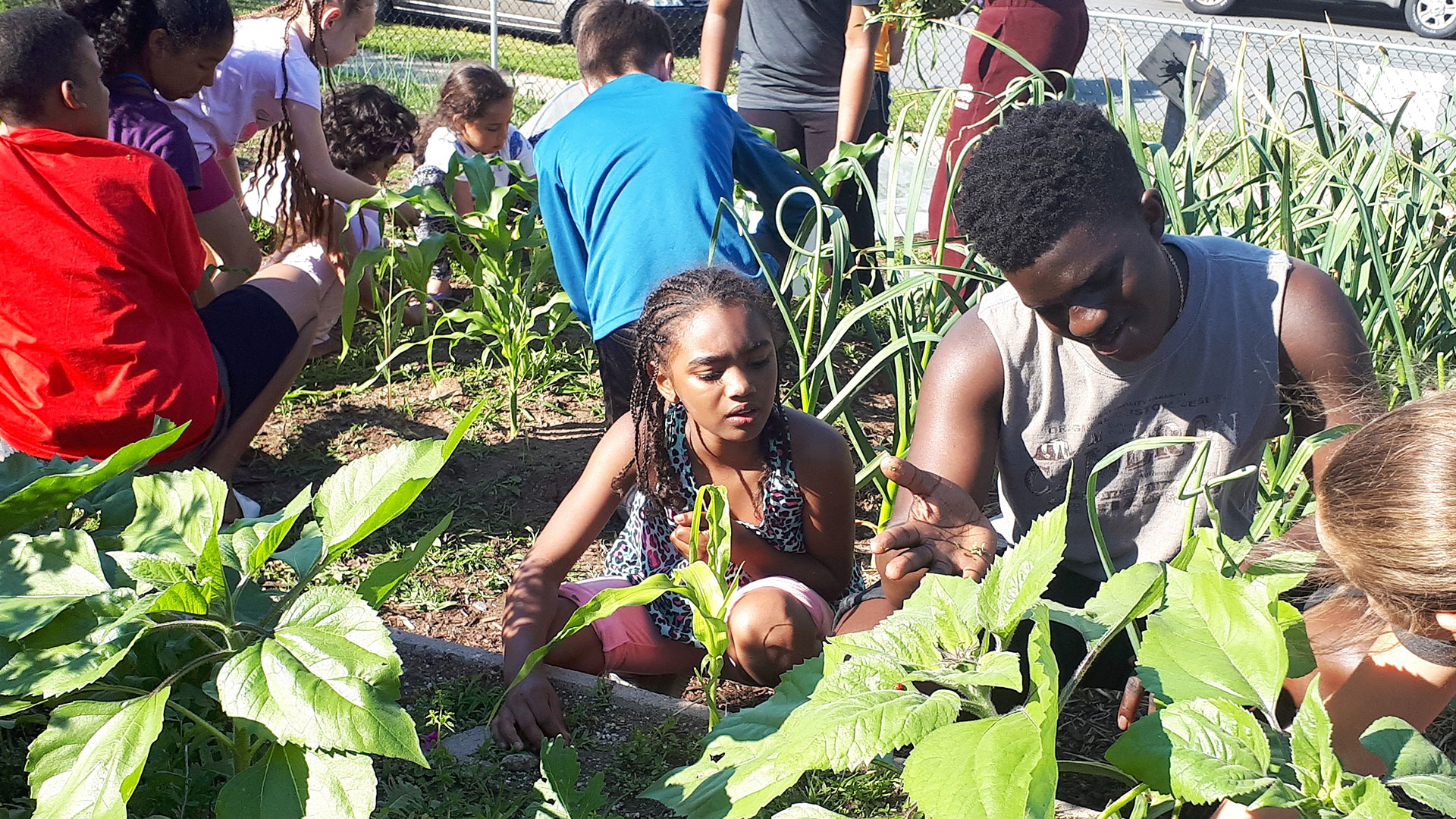 Hope Blooms youth work in their garden
